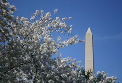 Washington DC for virtual office meeting room and live receptionist